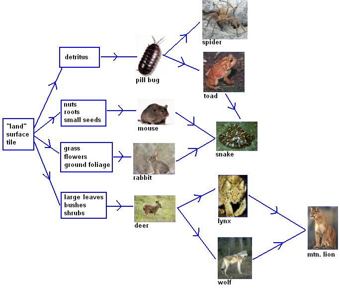 diagram of food chain and food web. tundra food web. tundra food